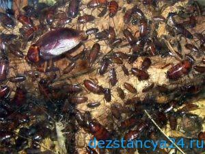 Есть смысл морить тараканов своими руками