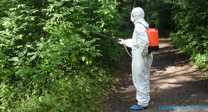 Обработка леса от насекомых вредителей