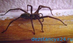 Уничтожение пауков