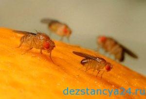 Уничтожение пищевой мошки