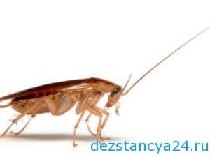 unichtozhenie-tarakanov25