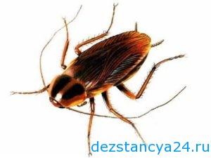 уничтожение тараканов в Куркино