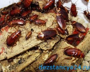 unichtozhenie-tarakanov38