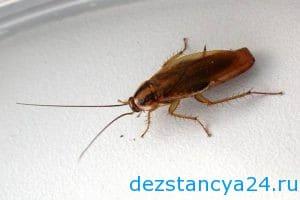 ses-sluzhba-degunino-dezinfekciya-i-dezinsekciya-v-degunino-2