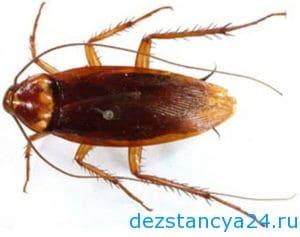 ses-sluzhba-dmitrov-dezinfekciya-i-dezinsekciya-v-dmitrove-2
