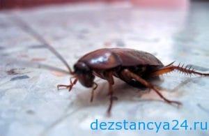 ses-sluzhba-dubna-dezinfekciya-i-dezinsekciya-v-dubne-2