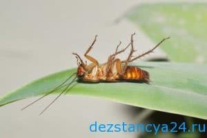 ses-sluzhba-kapotnya-dezinfekciya-i-dezinsekciya-v-kapotne-2