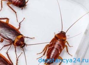 ses-sluzhba-klimovsk-dezinfekciya-i-dezinsekciya-v-klimovske-2