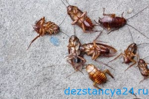 ses-sluzhba-kotelniki-dezinfekciya-i-dezinsekciya-v-kotelnikax-2