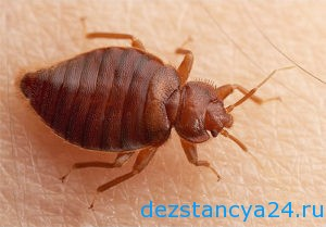 ses-sluzhba-luxovicy-dezinfekciya-i-dezinsekciya-v-luxovicax