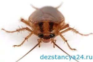 ses-sluzhba-mitino-dezinfekciya-i-dezinsekciya-v-mitino-2