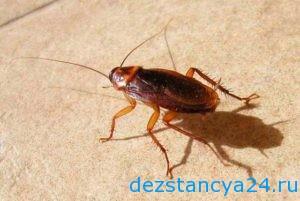 ses-sluzhba-pavlovskij-posad-dezinfekciya-i-dezinsekciya-v-pavlovskom-posade-2