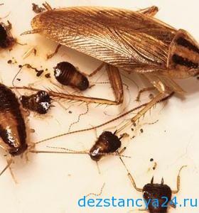 ses-sluzhba-pushkino-dezinfekciya-i-dezinsekciya-v-pushkino-2