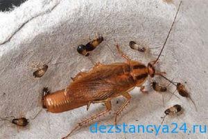 ses-sluzhba-rostokino-dezinfekciya-i-dezinsekciya-v-rostokino-2