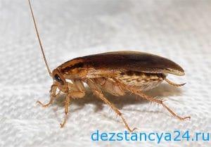 ses-sluzhba-solnechnogorsk-dezinfekciya-i-dezinsekciya-v-solnechnogorske-2