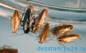 ses-sluzhba-traparevo-dezinfekciya-i-dezinsekciya-v-traparevo-2