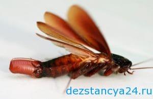 ses-sluzhba-volokolamsk-dezinfekciya-i-dezinsekciya-v-volokolamske-2